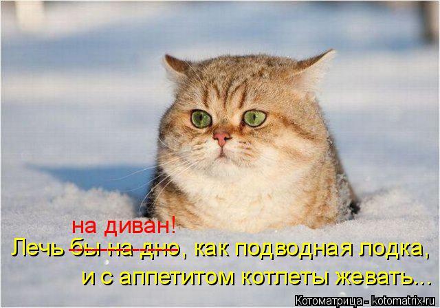 kotomatritsa_T (640x448, 217Kb)