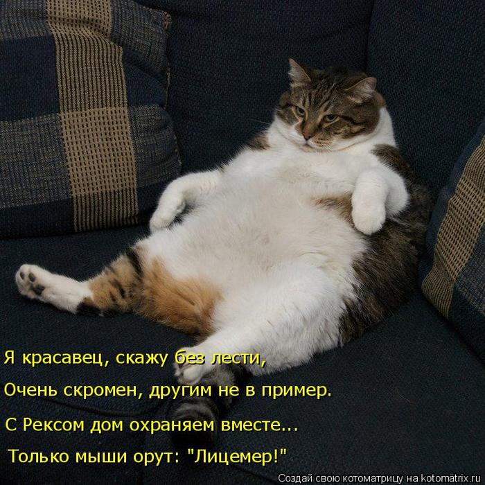 kotomatritsa_7 (700x700, 534Kb)