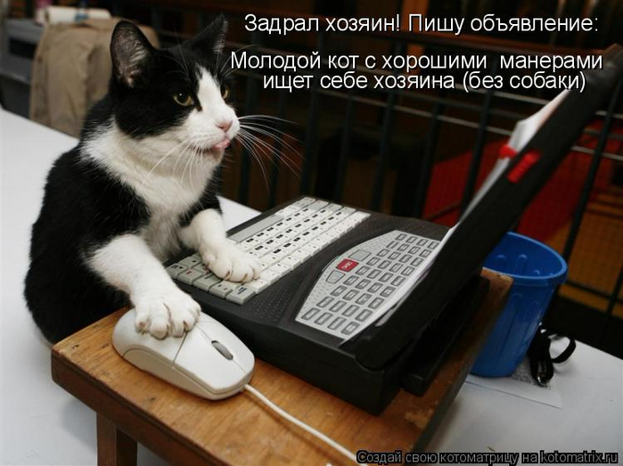 kotomatritsa_e (700x523, 309Kb)