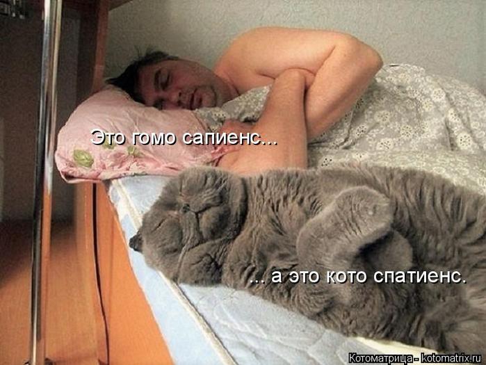 kotomatritsa_i (700x525, 326Kb)