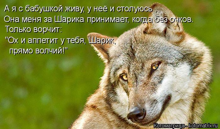 kotomatritsa_Qz (700x411, 289Kb)