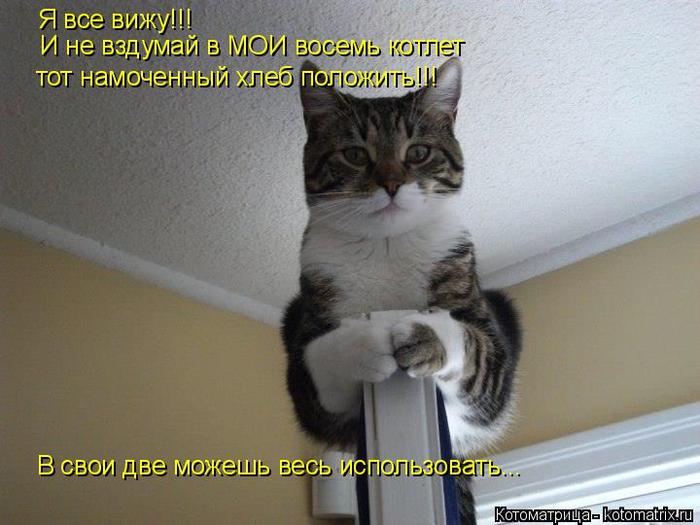 kotomatritsa_wW (700x525, 323Kb)