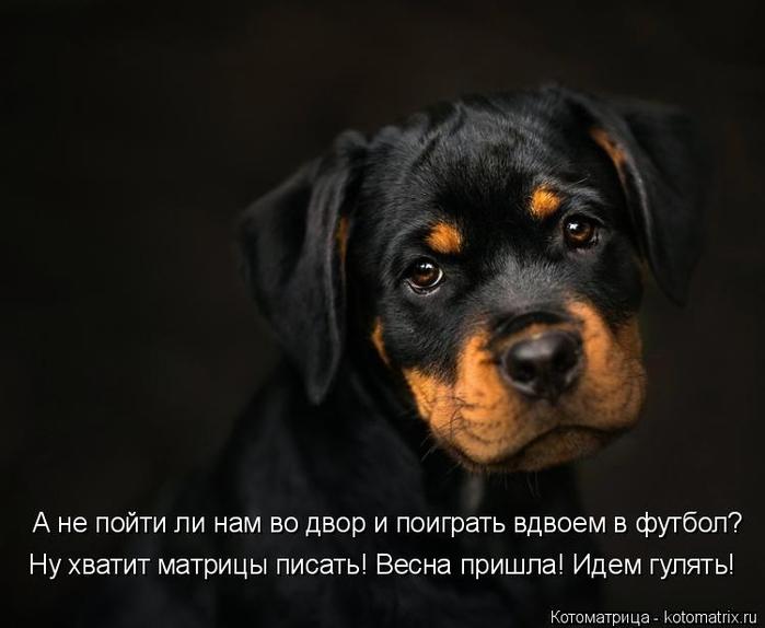 kotomatritsa_X (700x574, 182Kb)