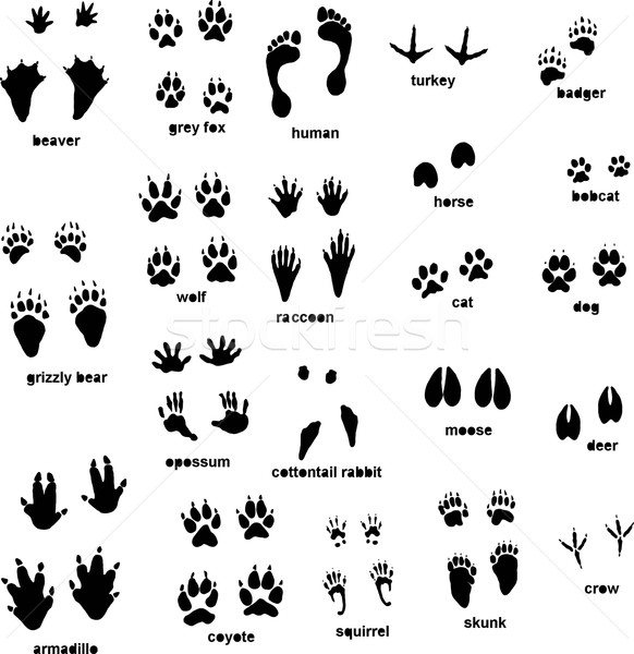5078100_stock-vector-animal-tracks (582x600, 138Kb)