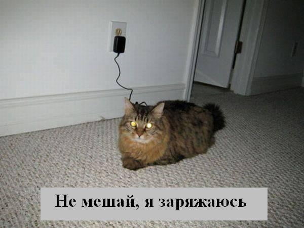 prikolnye_koty_foto_s_nadpisyami_02 (600x451, 33Kb)