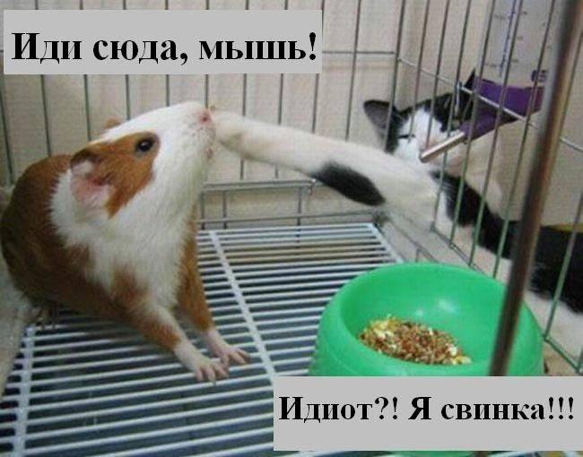 prikolnye_koty_foto_s_nadpisyami_01 (650x510, 48Kb)