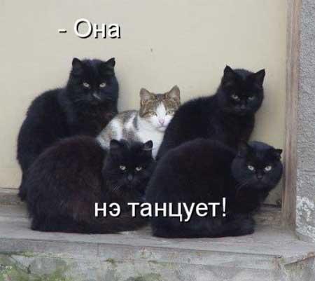 koty_s_nadpisyami_02 (450x401, 15Kb)