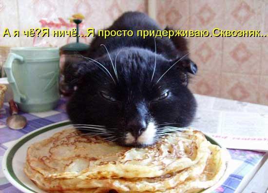 foto_kotov_01 (550x396, 28Kb)