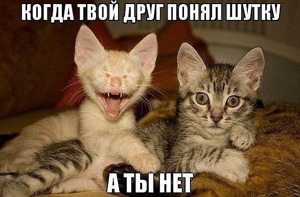 prikolchik_4 (587x386, 108Kb)