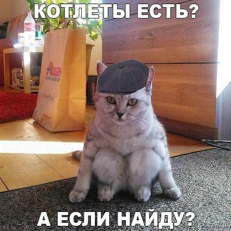 1462677893_kotoprikoly-svezhie-18_xaxa-net.ru_ (450x449, 54Kb)
