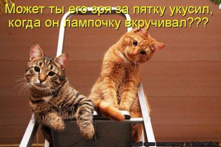 1332076670_kotomatrix_08 (450x299, 33Kb)