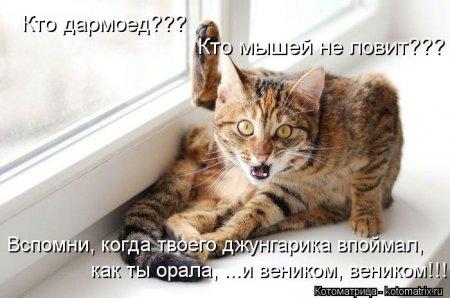 1350912222_kotomatritsa_2w (450x298, 32Kb)