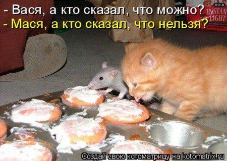 1332076682_kotomatrix_01 (450x319, 41Kb)
