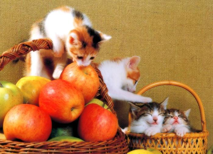 Kittens with Apples and Basket (700x507, 72Kb)