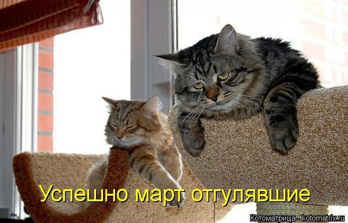 kotomatritsa_6 (700x449, 304Kb)