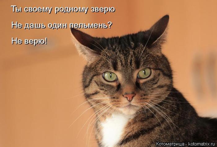 kotomatritsa_eU (700x474, 243Kb)