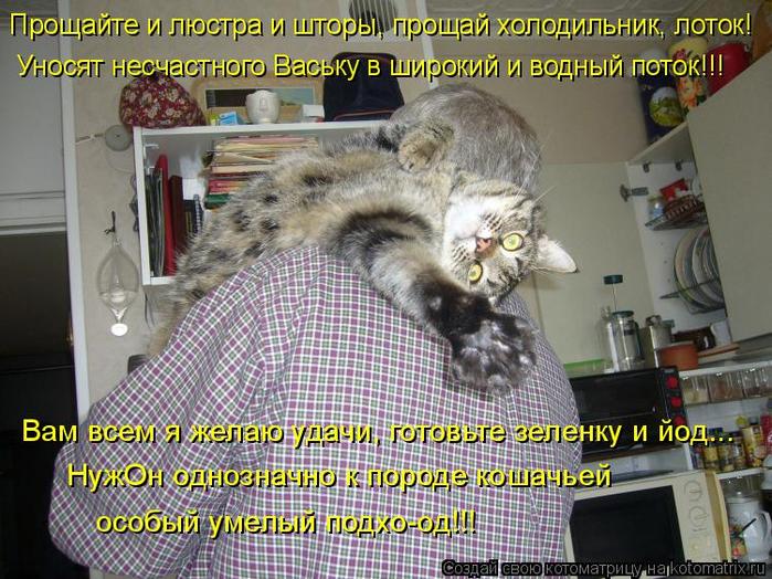 kotomatritsa_H (700x524, 473Kb)