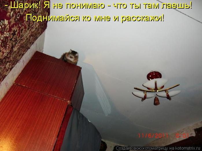 kotomatritsa_O (700x524, 291Kb)