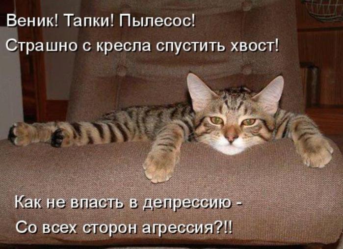 kotomatritsa_u (700x507, 341Kb)