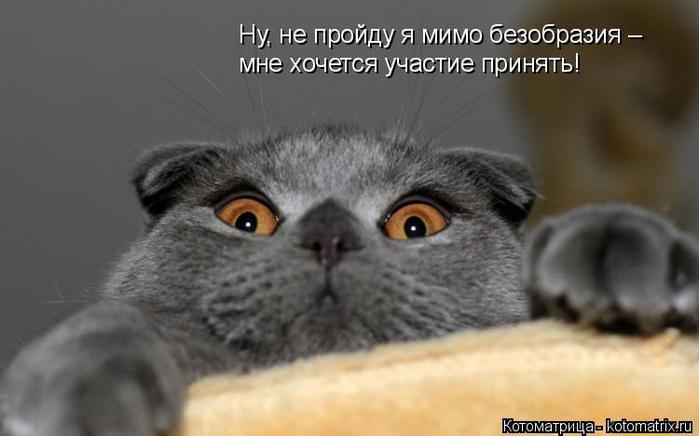 kotomatritsa_V (700x436, 181Kb)