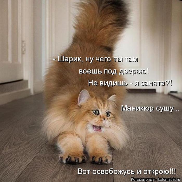 kotomatritsa_n (700x700, 372Kb)