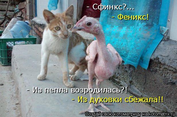 kotomatritsa_R3 (618x411, 221Kb)