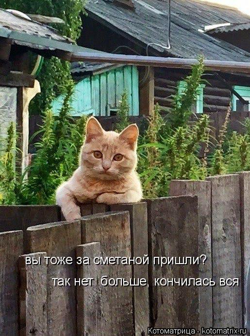 kotomatritsa_z (1) (515x692, 338Kb)