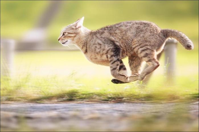 cats-cats-019 (700x466, 166Kb)