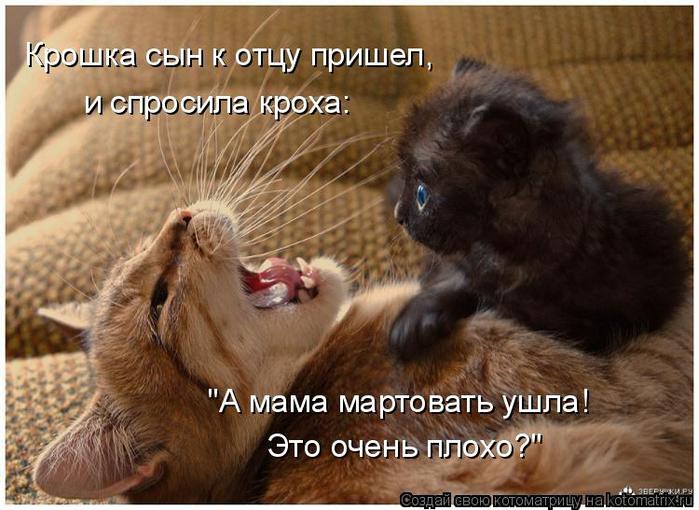 Мартовская котоматрица. Свежая