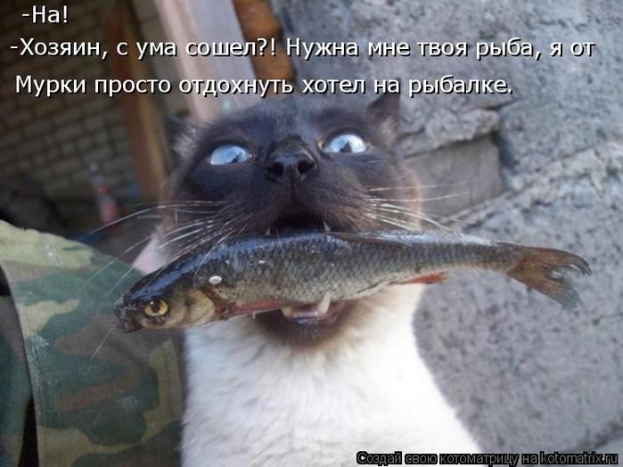 kotomatritsa_G (700x524, 301Kb)