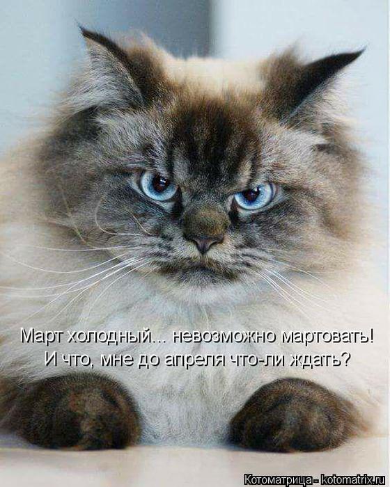 kotomatritsa_MG (560x700, 372Kb)