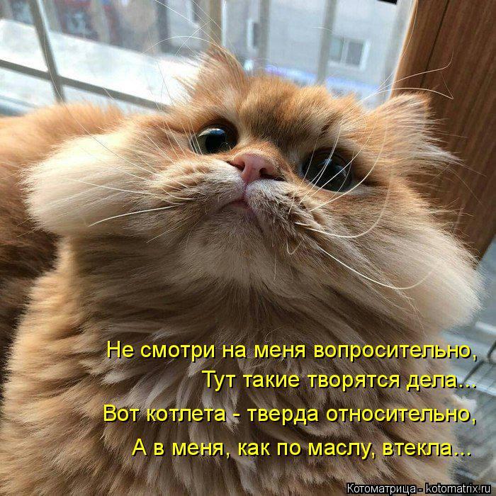 kotomatritsa_P (700x700, 449Kb)