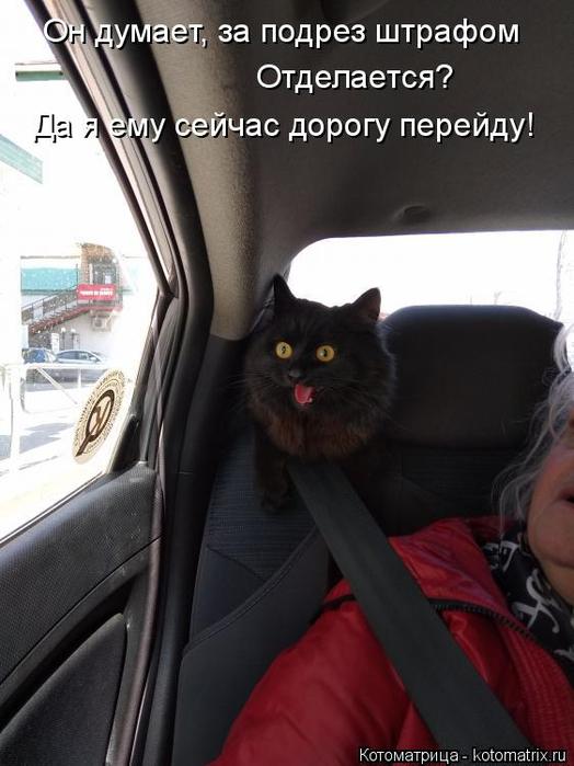 kotomatritsa_1m (524x700, 266Kb)