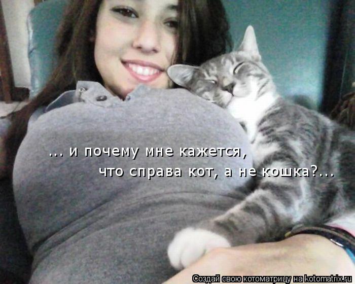 kotomatritsa_B (2) (700x560, 230Kb)