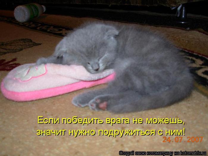 kotomatritsa_rw (700x524, 322Kb)