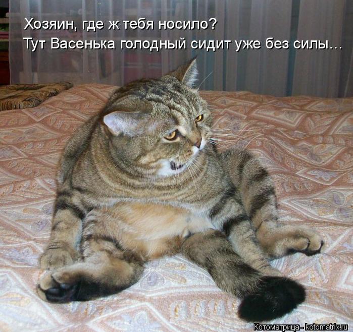 kotomatritsa_Sl (700x658, 502Kb)