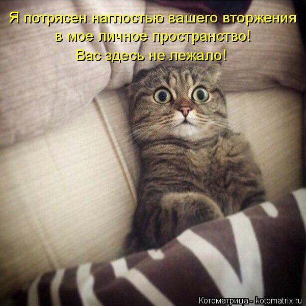 kotomatritsa_1I (600x601, 254Kb)
