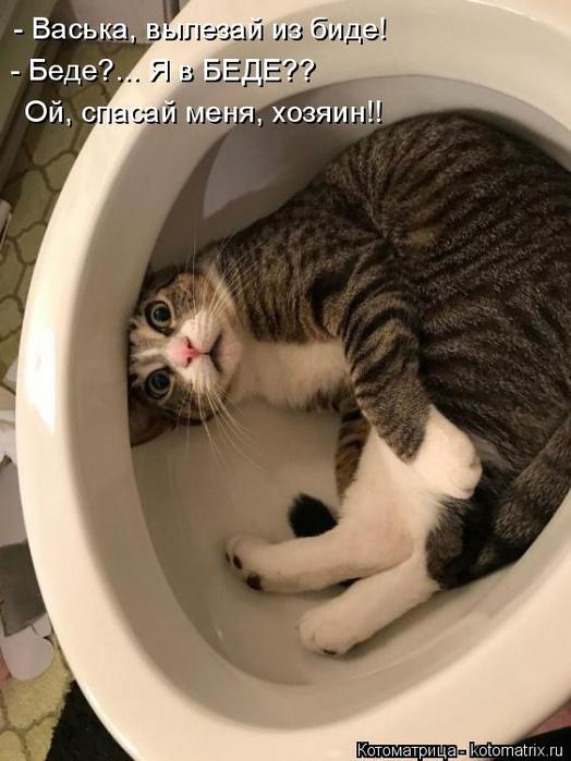 kotomatritsa_BI (524x700, 274Kb)