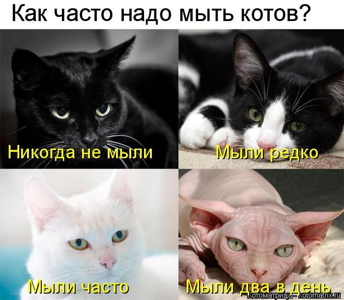 kotomatritsa_G (700x612, 324Kb)