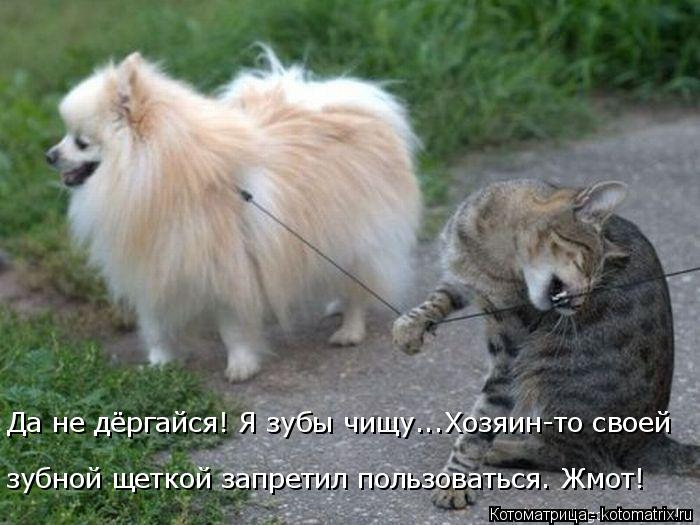 kotomatritsa_lr (700x525, 230Kb)