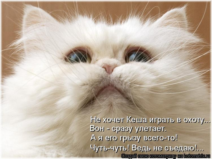 kotomatritsa_q4 (700x524, 317Kb)