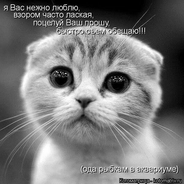 kotomatritsa_Y (600x600, 165Kb)