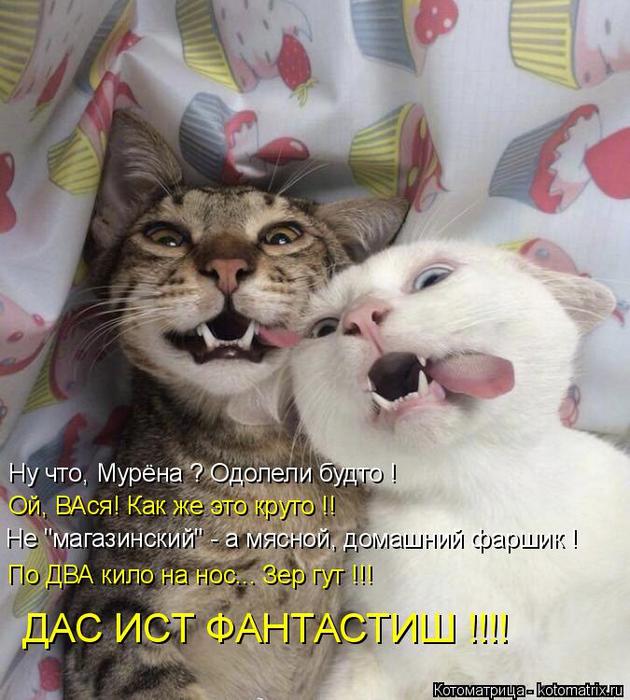 kotomatritsa_8 (630x700, 421Kb)