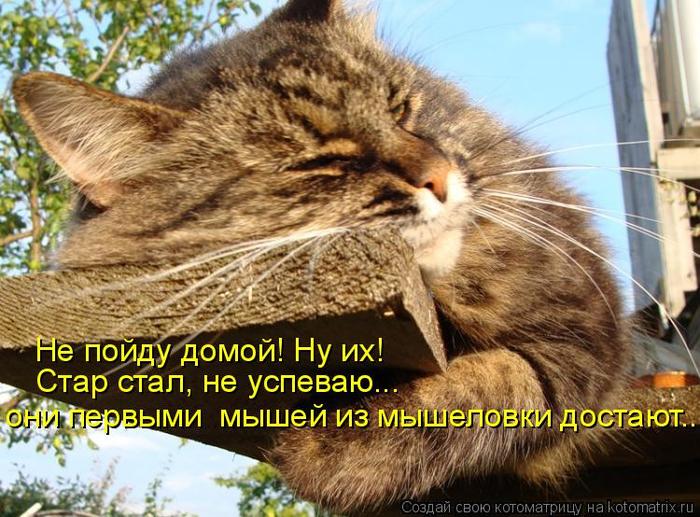 kotomatritsa_e (700x517, 458Kb)