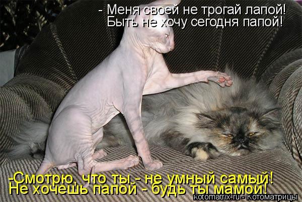 kotomatritsa_s (600x401, 197Kb)