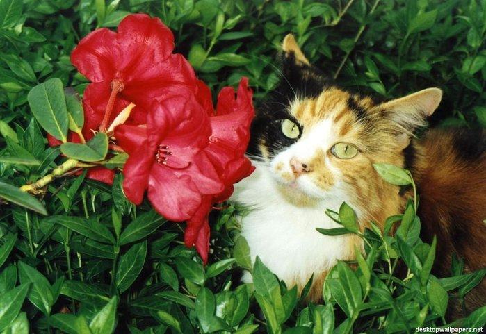 cat01_1024x768 (700x481, 81Kb)