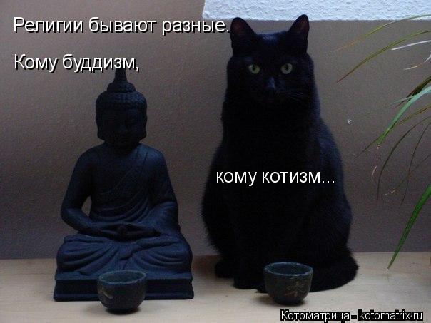 kotomatritsa_39 (604x453, 144Kb)