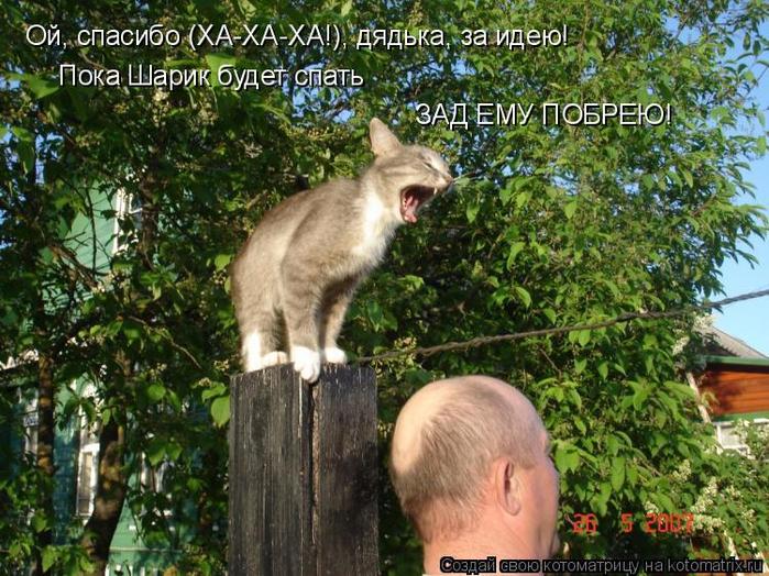 kotomatritsa_j (700x524, 514Kb)