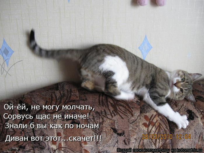 kotomatritsa_p (700x524, 335Kb)