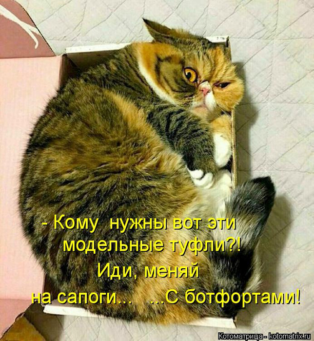 kotomatritsa_qm (644x700, 533Kb)